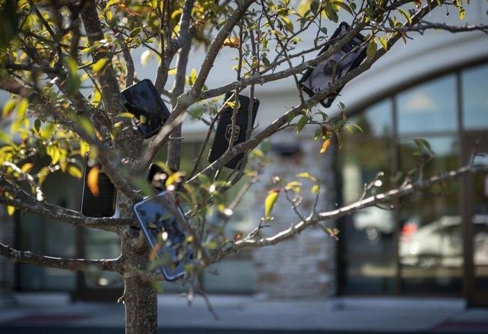Смартфоны на деревьях